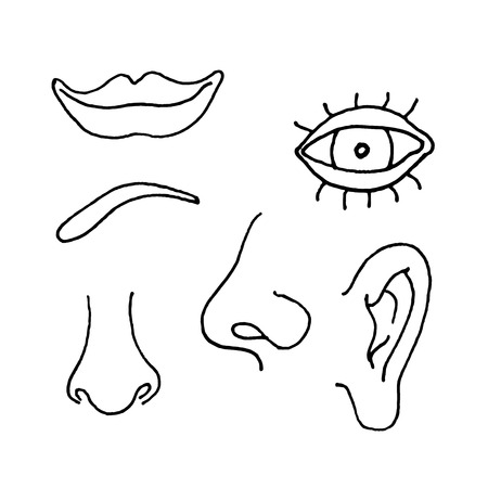 Illustration of parts of a human face
