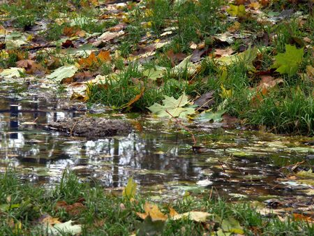 A clear puddle on the grass with coloured leaves all around photo