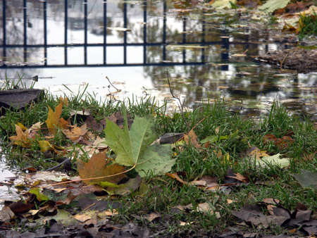 Fence bars reflected in a puddle with coloured leaves all around photo