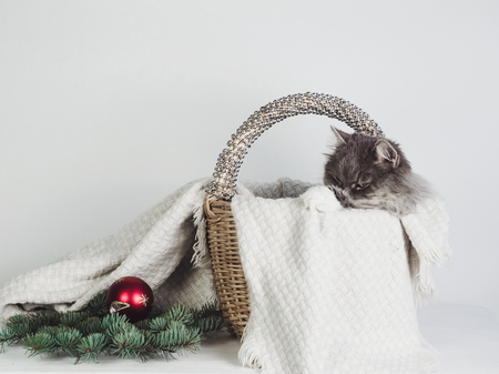 Tender, sweet cat in a wicker basket, near which lie Christmas decorations