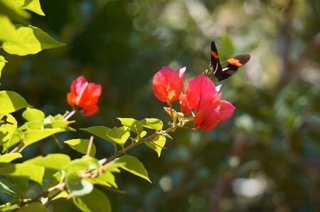 Beautiful butterfly flying near a red flower Foto de archivo - 93970250