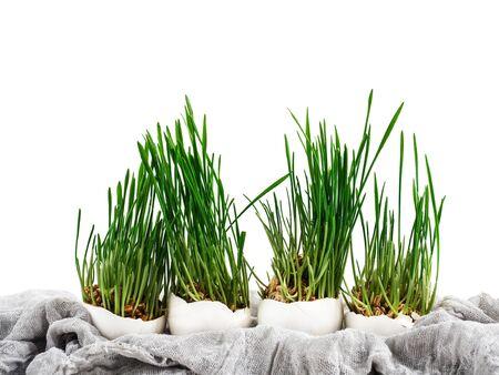 Beautiful, bright, fresh, green grass Stock Photo