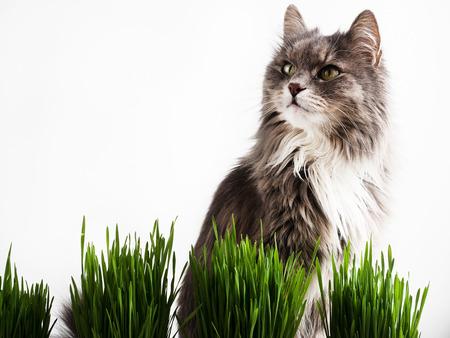 Sweet kitten and green grass in pots
