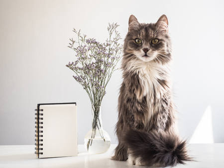 Kitten, beautiful flowers and blank notebook page Stock Photo
