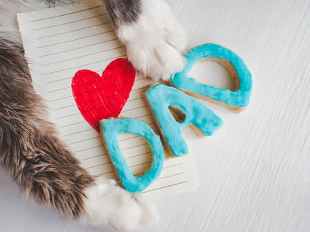 Lovely cats paws, greeting card with painted, red heart