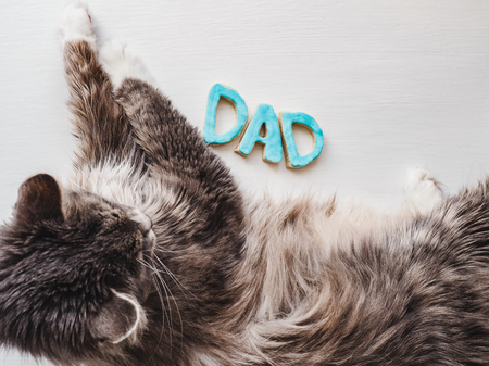 Sweet, cute kitten and the word DAD