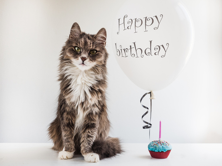 Cute, sweet kitty, white, helium balloon with birthday greetings and cupcake with candle. White, isolated background.Preparation for the festive event.Congratulations for colleagues,friends,loved ones Stock Photo