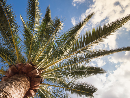 Palm leaves on the background of blue sky, white clouds and gentle sunlight