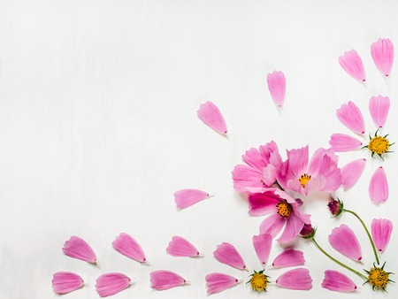 Pink petals of a beautiful flower, laid out on a white, wooden table. Top view, close-up, isolated. Congratulations on holidays for loved ones, relatives, friends and colleagues