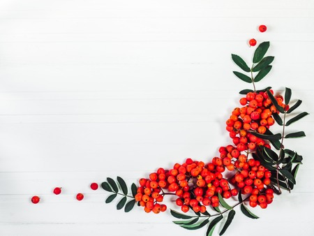 Branch of mountain ash with red berries on a white, wooden table. Top view, close-up, isolated. Congratulations for loved ones, relatives, family, friends and colleagues
