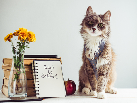 Charming, grey, fluffy kitten and vintage books Stock Photo