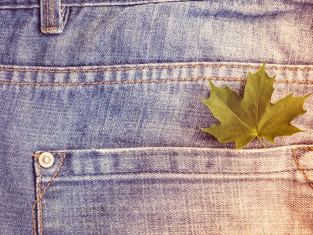 Maple leaves on a background of blue, stylish jeans Stock Photo