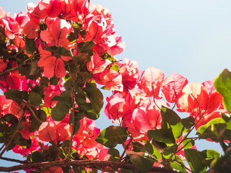 Beautiful pink and red flowers