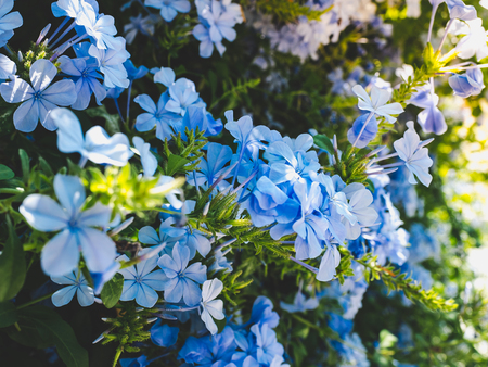 Beautiful blue flowers on the background the blue sky Stock Photo