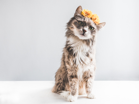 Charming, fluffy kitten with yellow flowers