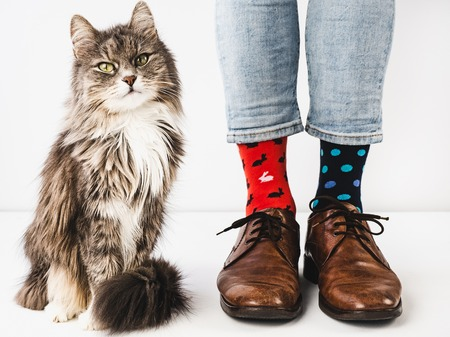 Charming, gray kitten and mens legs, stylish shoes, blue pants and bright, colorful socks on a white, isolated background. Close-up. Studio photo. Concept of lifestyle, fun and elegance.