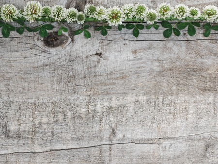 Beautiful flowers of clover lying on unpainted boards. Solemn event. Place for your inscription. Top view, close-up. Congratulations to loved ones, family, relatives, friends and colleagues Stockfoto