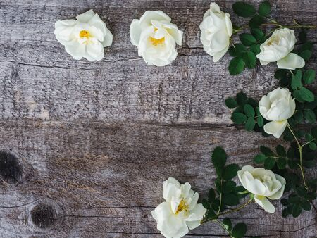Branch of rose hip with blooming flowers, lying on unpainted, frayed boards. Place for your inscription. Top view, close-up, flat lay. Congratulations to loved ones, relatives, friends and colleagues
