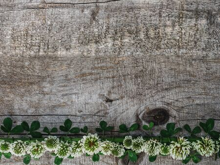 Beautiful, bright flowers of white clover and unpainted boards. Place for your inscription. Top view, close-up. Congratulations to loved ones, family, relatives, friends and colleagues