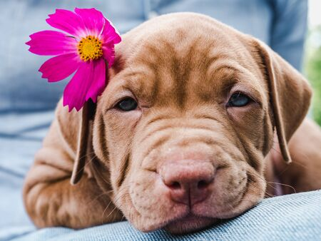 Cute, charming puppy and a bright, pink flower. Close-up. Pet Care Concept Reklamní fotografie - 127072994