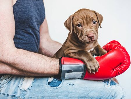 Young, charming puppy, men's hands and red boxing gloves. Close-up, white isolated background. Studio photo. Concept of care, education, training and raising of animals Reklamní fotografie - 127072999
