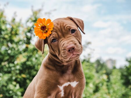 Cute, charming puppy, sitting on a soft rug on a background of green trees, blue sky and clouds on a clear, summer day. Close-up. Pet care concept