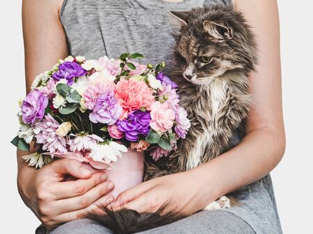 Cute, sweet kitten, vintage vase, bright bouquet of flowers and woman. Close-up. Pet care concept
