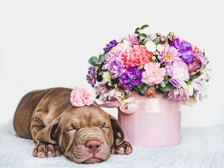 Young, charming puppy and a bouquet of fresh, bright flowers in a vintage vase. Close-up, isolated background. Studio photo. Concept of care, education, training and raising of animals