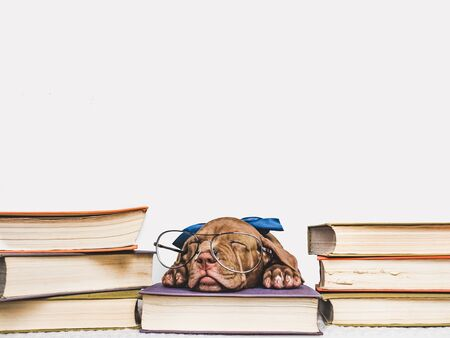 Cute, charming puppy and vintage books. Studio photo. Close-up, isolated background. Studio photo. Concept of care, education, training and raising of animals Reklamní fotografie