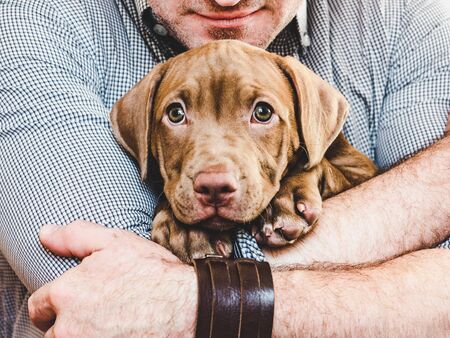 Man hugging a young, charming puppy. Close-up Reklamní fotografie