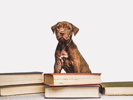 Cute, charming puppy and vintage books. Close-up, isolated background. Studio photo. Concept of care, education, obedience training and raising of pets