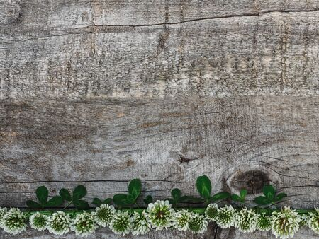 Bright floral pattern of white, summer clover, lying on unpainted boards. Place for your inscription. View from above, close-up. Congratulations to loved ones, family, relatives, friends, colleagues