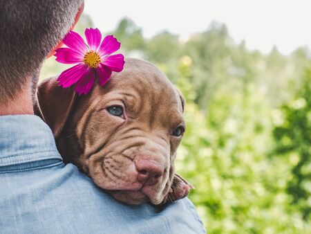 Pretty puppy of chocolate color and his caring owner on a background of blue sky, green trees on a clear, sunny day. Close-up, outdoor. Concept of care, education, obedience training, raising of pets Stock Photo