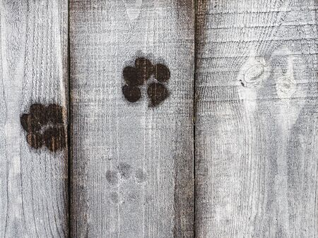 Dog footprints on a wooden surface. Close-up Stockfoto