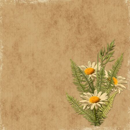 Card for the holiday with camomile on the abstract background photo