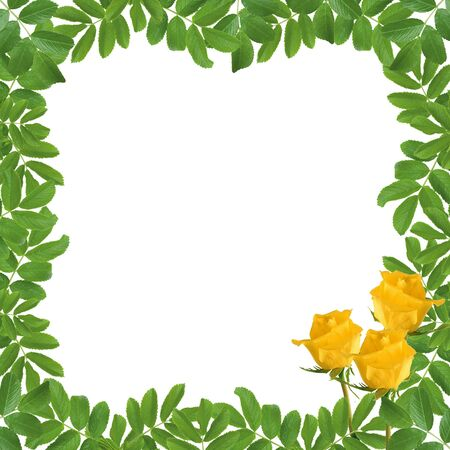 White frame with flower on the white background photo