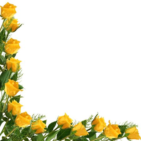 yellow roses: White frame with flower on the white background Stock Photo