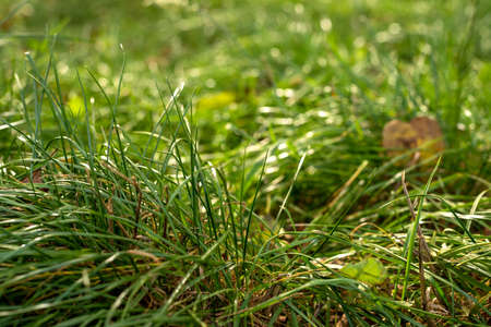 Fresh green grass background, selective focus