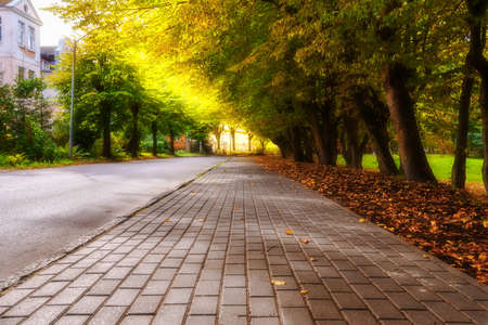 Autumn sidewalk with trees and fallen leaves in the city