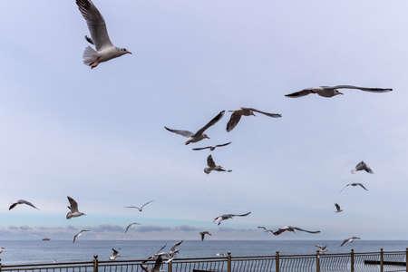 A flock of sea gulls flies on the Baltic Sea near the promenade