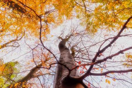 A tree trunk surrounded by tall trees, low angle shot - fall season.