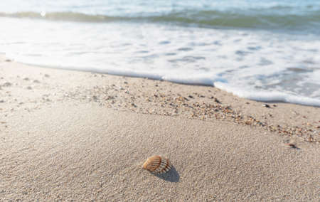 A small seashell on the coast of the Baltic Sea lies on the sand, washed by the waves. 版權商用圖片