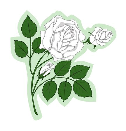 rosebuds: White rose with two rosebuds and with green leaves on the stem on the light green background
