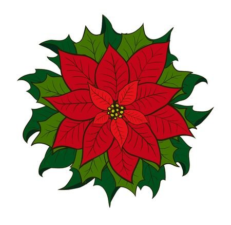 Poinsettia shrub with large showy scarlet bracts  and green leaves surrounding the small yellow flowers, popular as a houseplant at Christmas. Hand drown on the white background.