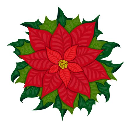 bracts large: Poinsettia shrub with large showy scarlet bracts  and green leaves surrounding the small yellow flowers, popular as a houseplant at Christmas. Hand drown on the white background.