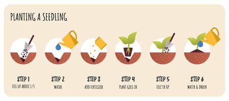 Steps in Transplanting Seedlings. Seedling gardening plant. 일러스트
