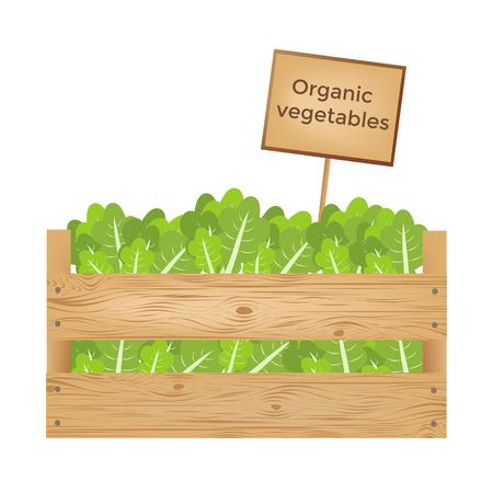 Boîtes en bois de laitue. Légumes organiques. Illustration vectorielle Banque d'images - 90043451