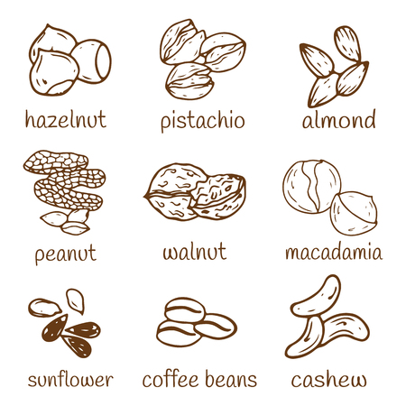 Set of hand-drawn nuts isolated.  Organic farm illustration. Healthy lifestyle vector design elements. Nut icons. 일러스트
