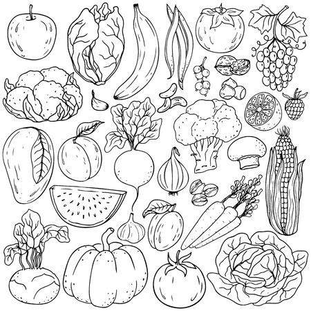 Organic farm illustration. Healthy lifestyle vector design elements. Healthy hand-drawing vegetables , fruits, berries, nuts, mushrooms
