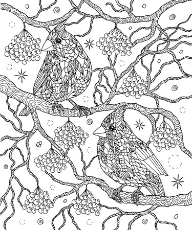 Birds and berries coloring page. Northern cardinals vector illus Illustration